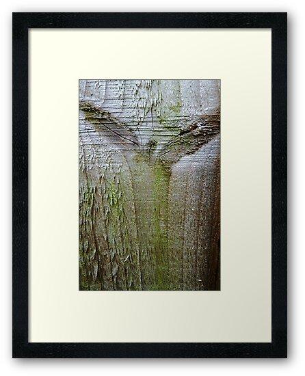 Angel of the wood by © Pauline Wherrell