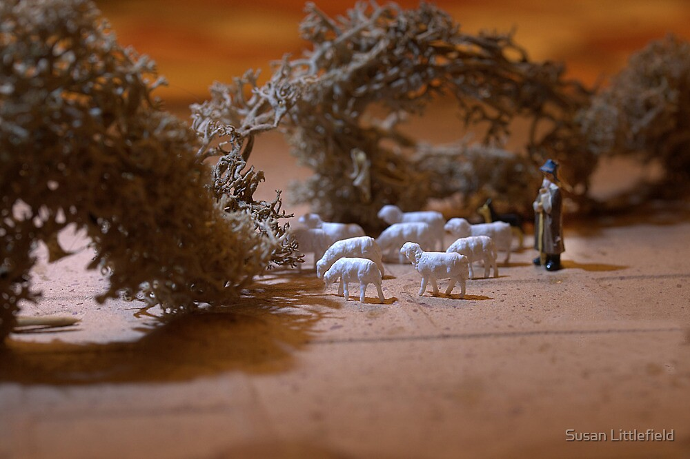 Where does the flock go for the summer? Shepherd Marvin said, 'I herd it through the grapevine' by Susan Littlefield