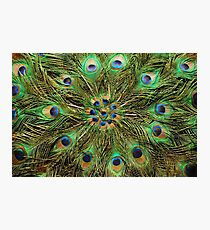 Peacock Feather Fan - Handcrafted Photographic Print