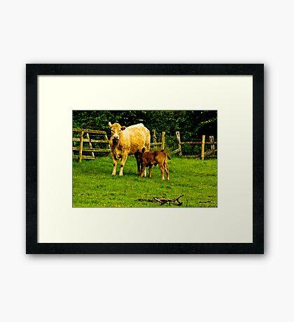 Mother & Calf Framed Print