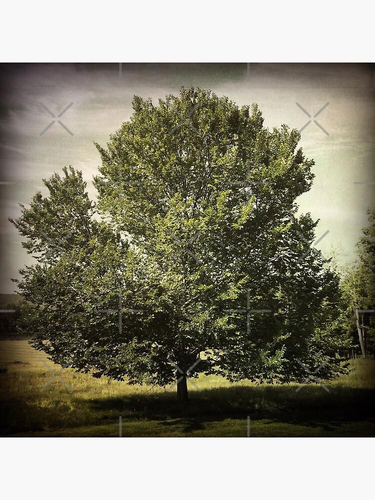 Nature Lovers Gift - Perfect Tree  by OneDayArt