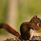 Red Squirrel Profile by Sean McConnery