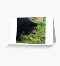 Andean Bear Greeting Card