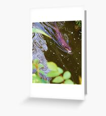 Oriental short-clawed Otter Greeting Card
