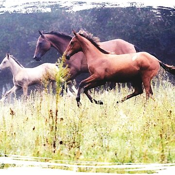 Galloping Horses Photography by PaintingPony