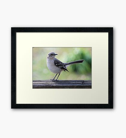 Mockingbird Hill Framed Print