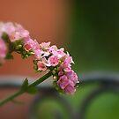 Pink bokeh by Andrea Rapisarda