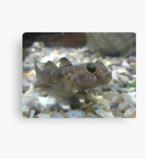 Eye of the .... Goby? Canvas Print