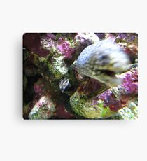 The Eel Part Two: GOTCHA! Canvas Print