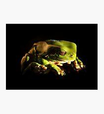 Green Tree frog in Queensland Fotodruck
