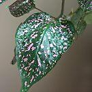 Spotted Leaf by Martha Medford