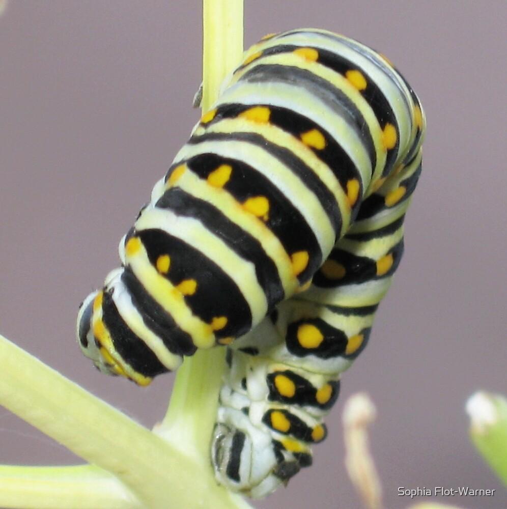 Caterpillar Yoga by Sophia Flot-Warner