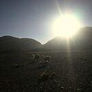 Salt Flats At Sunset by Mark Cassidy