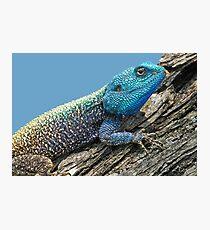 Baum Agama Fotodruck