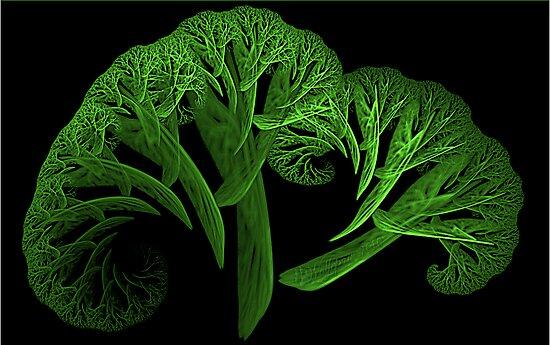 Apo Broccoli by wolfepaw