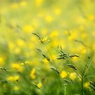 Yellow Spring by Donna-R