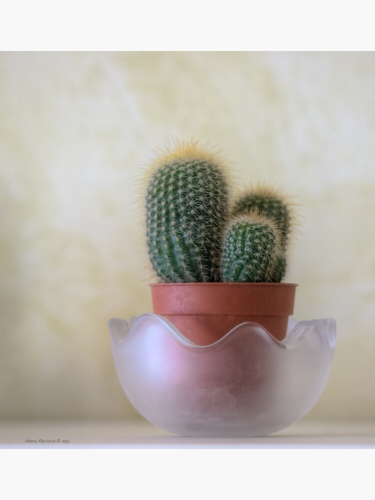A small cactus in my room by rapis60