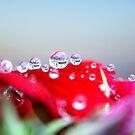 Drops Of Love by Stephanie Hillson
