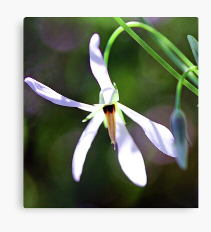 White Shooting Star Canvas Print