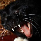 The Feline's Canines by Laura  O'Sullivan