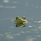Male Bullfrog by Michael  Dreese