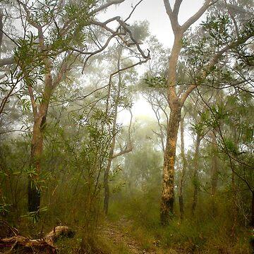 Morning mist, Hawkins Lookout ~ Wiseman's Ferry NSW by RosalieDale