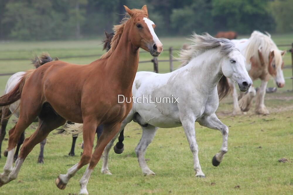 Crazy horses by DutchLumix
