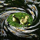 Through A Goslings Eye by velveteagle