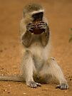 Monkey business by Explorations Africa Dan MacKenzie