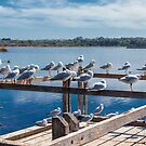 Seagulls at Lake Joondalup, Western Australia by Elaine Teague