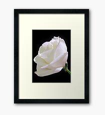 Heavenly Rose Framed Print