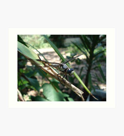 One very jazzy dragonfly... Art Print