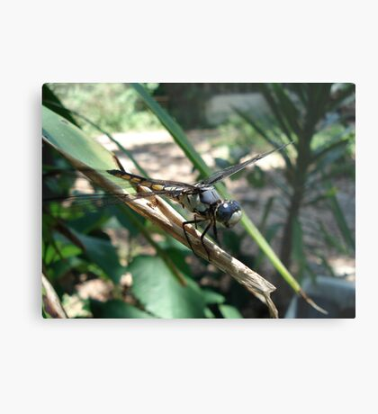 One very jazzy dragonfly... Metal Print