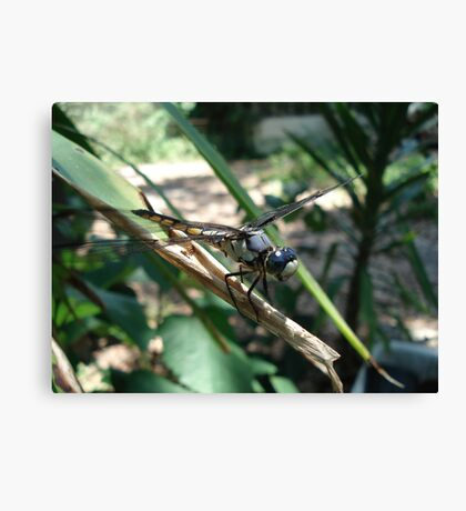 One very jazzy dragonfly... Canvas Print