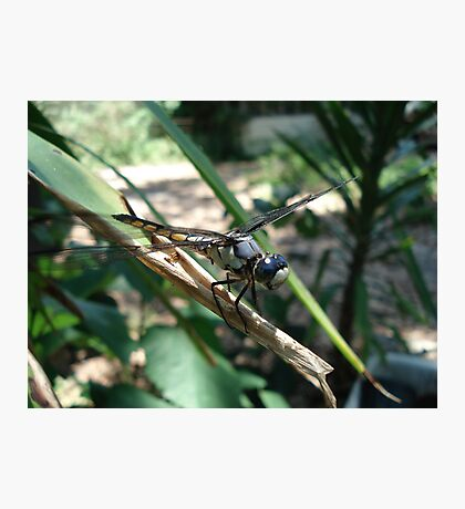 One very jazzy dragonfly... Photographic Print