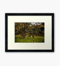 Under the Big Oak Tree Framed Print