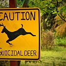 Suicidal Deer by Xcarguy