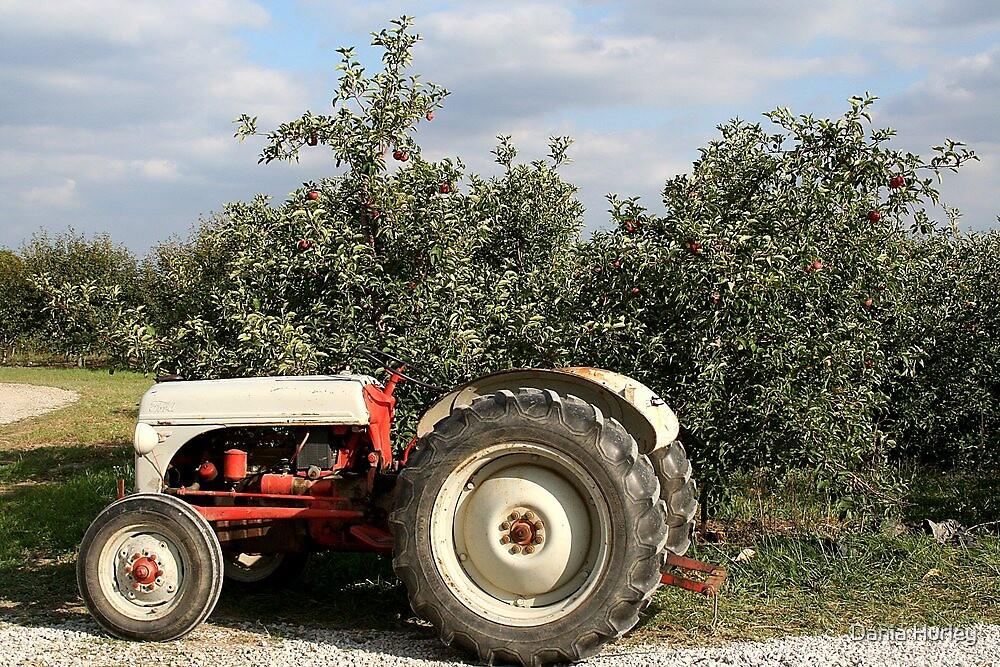 Antique Tractors In Ohio : Quot vintage tractor fruit farm rural ohio by dania hurley