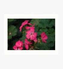 gardenia flower Art Print