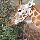 Snack Time by Sherrill Meredith