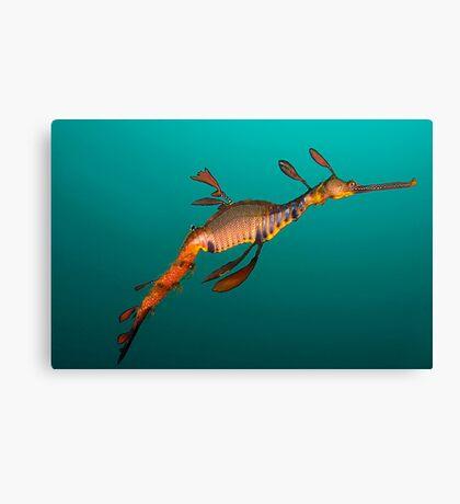 Tassie Dragon Canvas Print