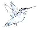 Hummingbird Watercolor Drawing, Blues and Grays by Kendra Shedenhelm