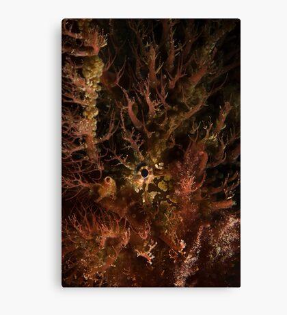 Tasselled Anglerfish Portrait Canvas Print