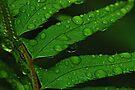 Spring Rain on Fern Leaves by Tori Snow