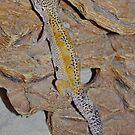 Leopard Gecko by AnnDixon