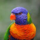 Bright Eyes - rainbow lorikeet by Jenny Dean