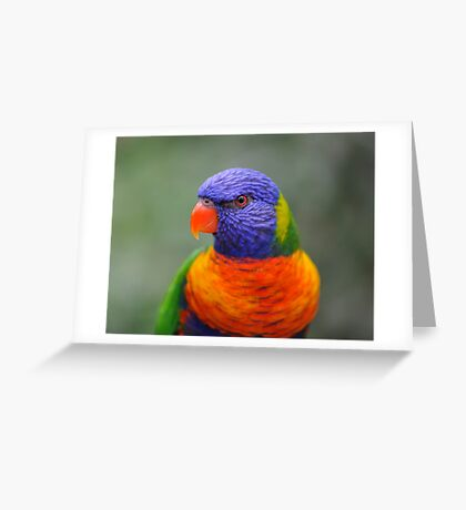 Bright Eyes - rainbow lorikeet Greeting Card