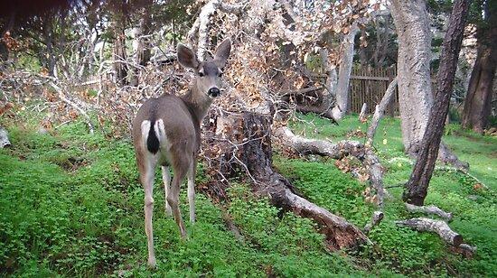 Deer Rear by jdbussone