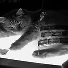 The Lightbox, the Cat and the Negatives II by Jen Waltmon