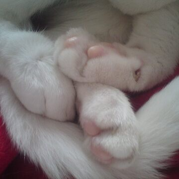 Big white paws by pixiealice